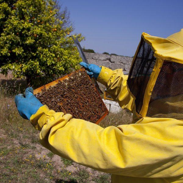 api miele