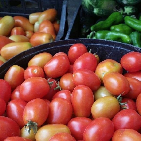 pomodoro biologico